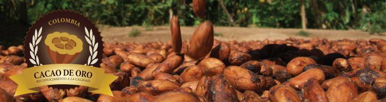 concurso cacao colombia