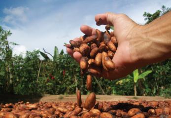 Mejores muestras de cacao colombiano